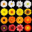 Various White, Yellow, Orange and Red Flowers Isolated on Black - Stock Photo