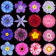 Various Red, Pink, Blue and Purple Flowers Isolated on Black — Stock Photo