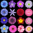 Stock Photo: Various Red, Pink, Blue and Purple Flowers Isolated on Black