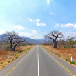 Old Baobab Trees along straight road with mountains — Stock Photo #14233071