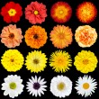 Red, Orange, Yellow and White Flowers Isolated on Black — Stock Photo #14233217