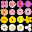 Big Selection Pink, Yellow and White Flowers Isolated — Stock Photo