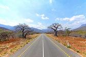 Starý baobab stromy po rovné silnici s horami — Stock fotografie