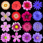 Big Selection of Colorful Flowers Isolated on Black — Foto Stock