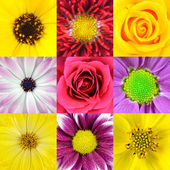 Collection of Nine Various Flowers Macros — Stock Photo