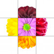 Colorful Daisy Flower mosaic design — Stock Photo