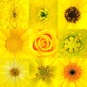 Collection of Nine Yellow Flower Macros — Stock Photo