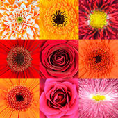 Collection of Nine Red Flower Macros — Stock Photo