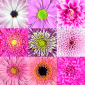 Collection of Nine Pink Flower Macros — Stock Photo