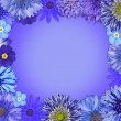 Flower Frame with Blue, Purple Flowers — Stock Photo