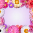 Flower Frame Pink, Purple, Red Flowers — Stock Photo #22010293