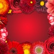 Flower Frame with Red Flowers on Purple Background — Stock Photo