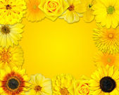 Flower Frame with Yellow Flowers on Orange Background — Stock Photo
