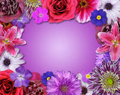 Flower Frame Pink, Purple, Red Flowers — Stock Photo