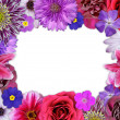Flower Frame Pink, Purple, Red Flowers on White -  