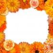 Royalty-Free Stock Photo: Flower Frame with Orange Flowers on White