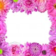 Flower Frame Pink, Purple, Red Flowers on White — Stock Photo #22361393
