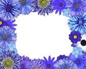 Flower Frame with Blue, Purple Flowers on White — Stock Photo
