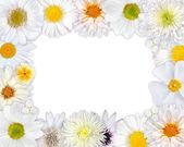 Flower Frame with White Flowers on Blank Background — Stok fotoğraf