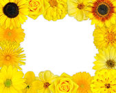 Flower Frame with Yellow Flowers on Blank Background — Stock Photo