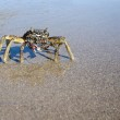 Closeup of Crab on a wet sandy beach — Stock Photo