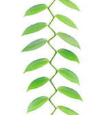 Tropical leaves growing upwards isolated on white — Stock Photo