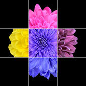 Colorful Chrysanthemum Flower Mosaic Design — Stock Photo