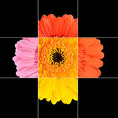 Colorful Gerbera Marigold Flower Mosaic Design — Stock Photo