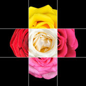 Colorful Rose Flower mosaic design — Stockfoto