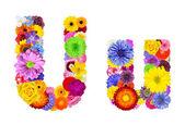 Flower Alphabet Isolated on White - Letter U — Stock Photo