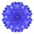 Blue Chrysanthemum Flower Kaleidoscope Isolated on White — Stock Photo