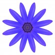 Blue Osteospermum Daisy Flower Kaleidoscope Isolated on White — Foto de Stock