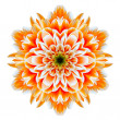 Orange Chrysanthemum Mandala Flower Kaleidoscope Isolated on White — Stock Photo