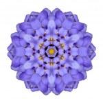 Mandala Flower Isolated Blue Iberis Kaleidoscope — Stock Photo #34144015