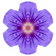 Purple Mandala Geranium Flower Isolated on White — Stock Photo
