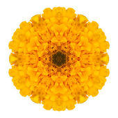Yellow Marigold Mandala Flower Kaleidoscope Isolated on White — Foto Stock
