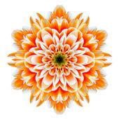 Orange Chrysanthemum Mandala Flower Kaleidoscope Isolated on White — Stock Photo