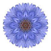 Blue Chrysanthemum Mandala Flower Kaleidoscope Isolated on White — Stock Photo