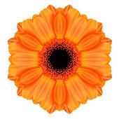 оранжевый мандала гербера цветок калейдоскоп изолированные — Стоковое фото