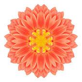 Mandala Gerbera Flower Kaleidoscope Isolated on White — Stock Photo