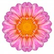 Pink Dahlia Flower Kaleidoscope Isolated on White — Stock Photo #34617619