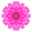 Kaleidoscopic Chrystanthemum Flower Mandala  Isolated on White — Stock Photo