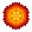 Kaleidoscopic Strawflower Mandala Isolated on White — Stock Photo