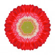 Red Gerbera Mandala Flower Kaleidoscopic Isolated on White — Stock Photo