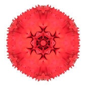 Red Carnation Mandala Flower Kaleidoscopic Isolated on White — Stock Photo