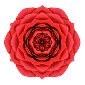 Red Rose Mandala Flower Kaleidoscopic Isolated on White — Stock Photo