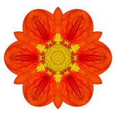 Orange Mandala Flower Kaleidoscopic Isolated on White — Stock Photo