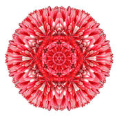 Red Daisy Mandala Flower Kaleidoscopic Isolated on White — Stock Photo