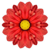 Red Dahlia Mandala Flower Kaleidoscopic Isolated on White — Stock Photo