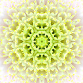 White Concentric Flower Center. Mandala Kaleidoscopic design — Stock Photo